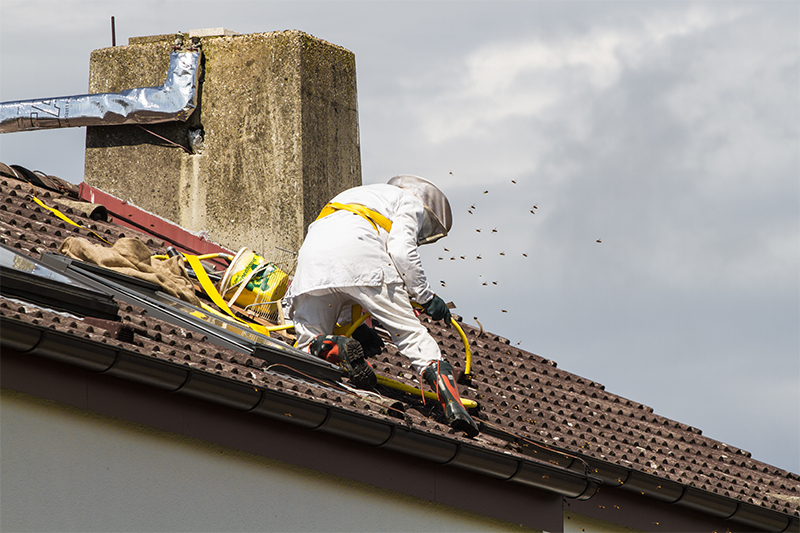 Bee Pest Control in Oxford Oxfordshire